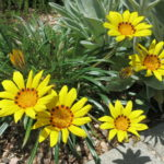 Big yellow flowers in the Whimsical Garden