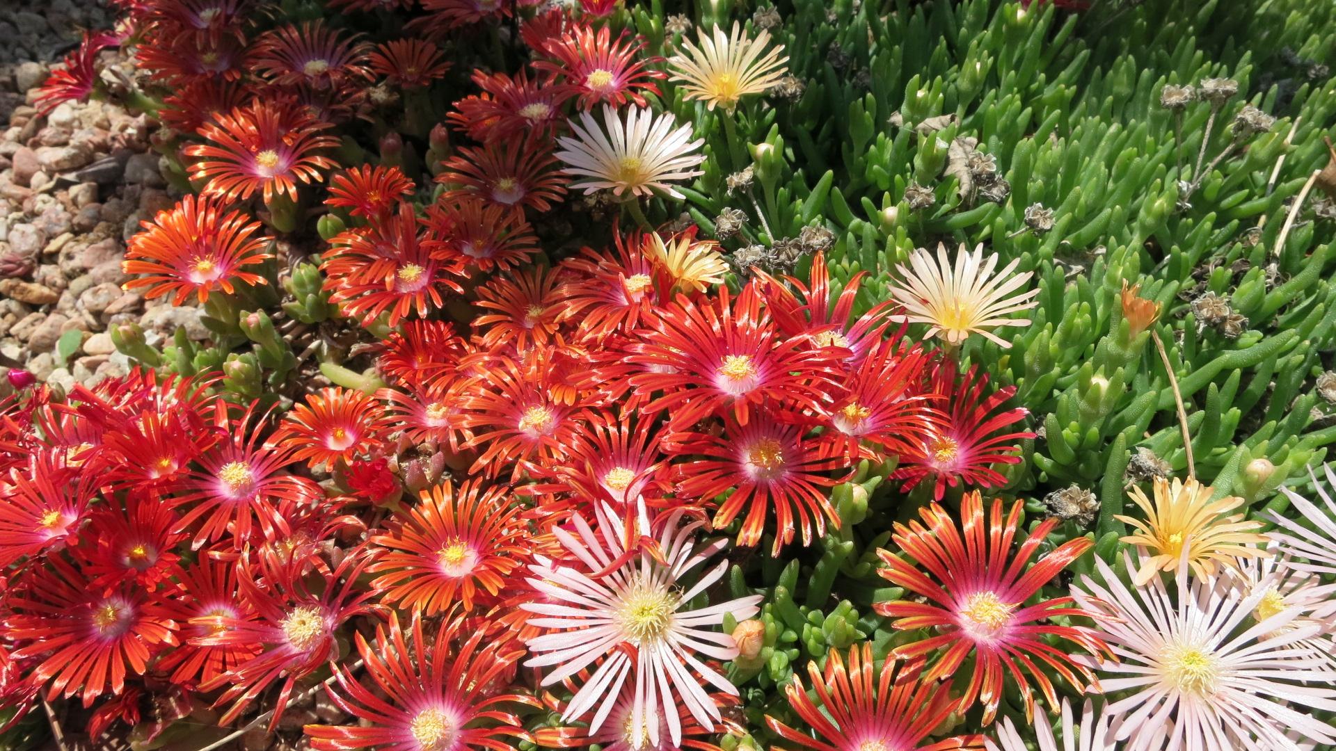 Red flowers in the rock garden