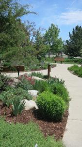 Broomfield Xeriscape Demo Garden Walkway