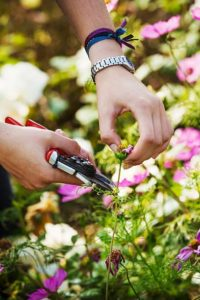 Deadheading plant with snippers