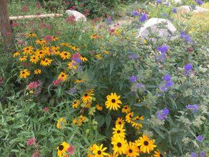 Mixed flowers in Broomfield demo garden