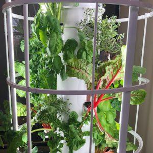 Vertical aeroponic garden